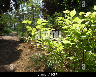 path in woods - Stock Photo