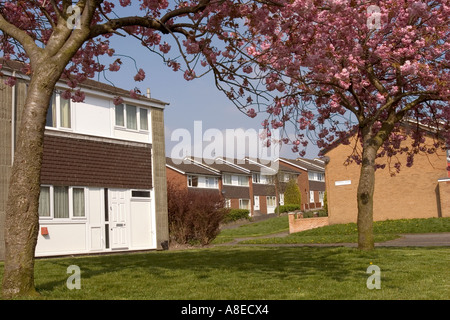 Cheshire Stockport Offerton Kelsbrook Court from Crowsdale Place with trees in blossom - Stock Photo