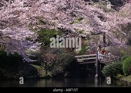 vector illustration geography travel japan tokyo garden parks korakuen park cherry