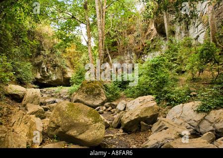 JUNGLE The dry river bed riverbed river bottom of NALEMORU RIVER  Oloitokitok LOITOKITOK kenya East Africa Kilimanjaro - Stock Photo