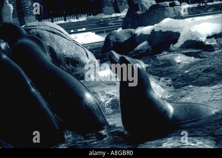 Yorck Wohnideen Gbr seals at central park zoo york city stock photo 14769386 alamy