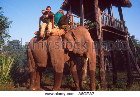 Tourists heading out for a dawn elephant ride, Royal Bardia National Park, Nepal - Stock Photo