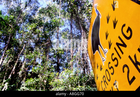 A road sign depicting the danger to cassowaries crossing near Mission Beach Far North Queensland Australia  - Stock Photo