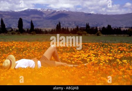 Girl lying in a field of California Poppies Eschscholzia californica - Stock Photo