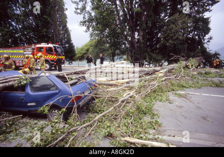 A car crushed by a fallen tree after a gale Queenstown Otago South Island New Zealand - Stock Photo