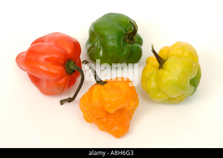 Vegetable produce typical supermarket bought Scotch bonnet chilli peppers - Stock Photo