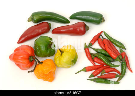 Vegetable produce typical supermarket bought mixed types of chilli peppers - Stock Photo