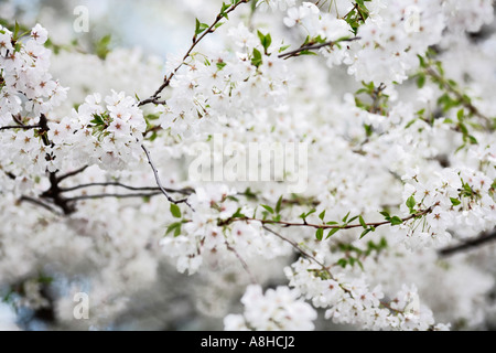 Blooming Tree - Stock Photo