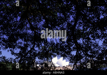 Sydney Opera House at dawn viewed through leaf canopy in the Domain - Stock Photo