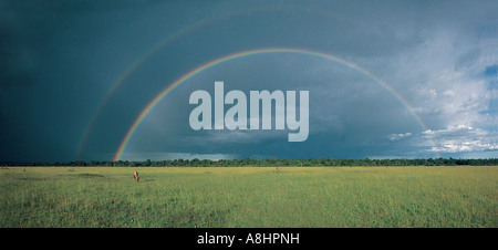 Wide angle view of Topi on green grass with very fine complete double rainbow Masai Mara National Resrve Kenya - Stock Photo
