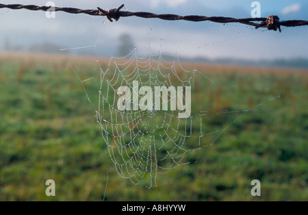 Spider web on barbed wire in the fog near Fox Glacier, South Island, New Zealand - Stock Photo
