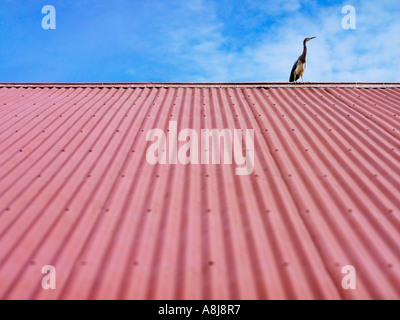 heron sitting on red corrugated roof against blue sky - Stock Photo
