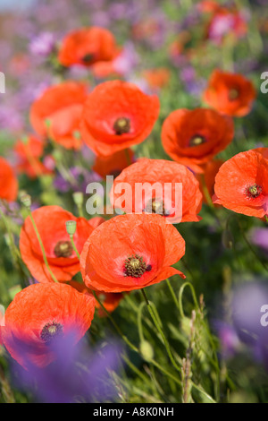 a group of wild flowers on a roadside verge against a
