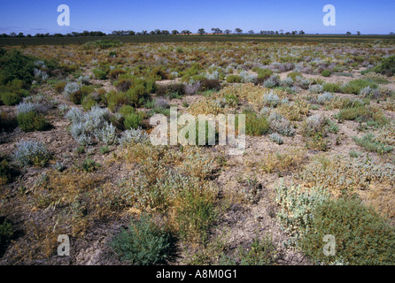 Saltbush plains and claypans [New South Wales] outback Australia - Stock Photo