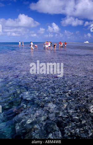 Tourists walking on reef Great Barrier Reef Queensland Australia vertical - Stock Photo