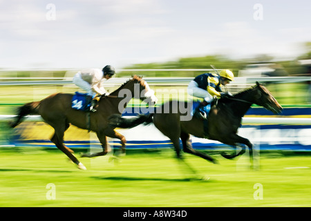 Horse Racing - in race to the finish line - Stock Photo