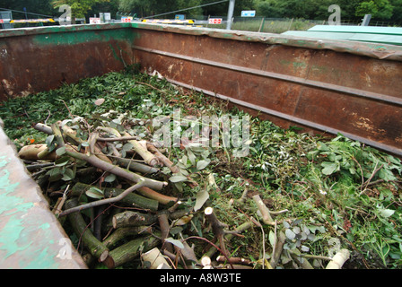 Local authority public recycling facility for green garden waste and placement in dedicated bin for removal to processing - Stock Photo