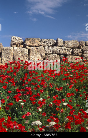 Poppies growing in the ruins of a Roman Fort against a blue sky - Stock Photo