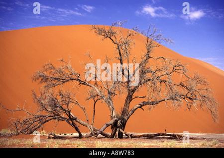 The worlds highest 1000 foot sand dunes in the earths oldest desert near Sossusvlei in the Namib Naukluft National - Stock Photo