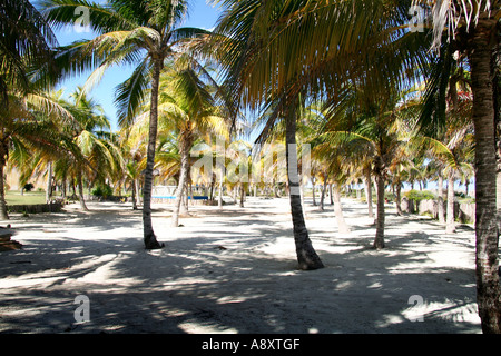 Palm trees, white sand, Cayo Coco, Cuba - Stock Photo