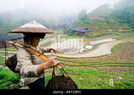Chinese Woman in Traditional Hat Carrying Manure to the Rice Terrace Fields Zhongliu Village Longsheng China - Stock Photo