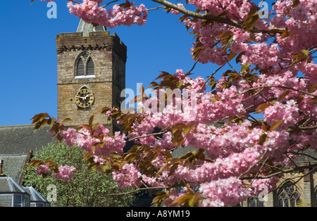 dh Dunblane cathedral DUNBLANE STIRLINGSHIRE UK Church clock tower springtime cherry blossom tree branches scotland