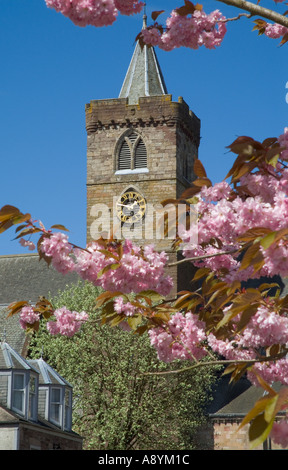dh Dunblane cathedral DUNBLANE STIRLINGSHIRE Church clock tower springtime cherry blossom tree branches