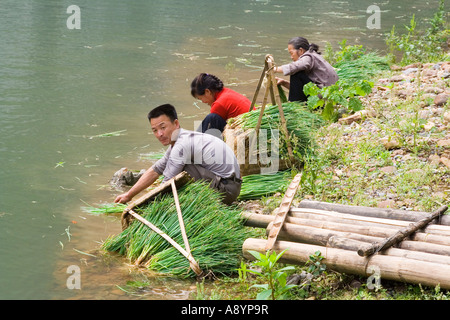 Chinese Farmers Clean Onions in the Li River Yangshuo China - Stock Photo