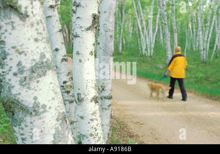 Woman walking a dog on a road through a birch forest in Zippel Bay State Park Minnesota - Stock Photo