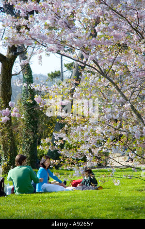 Paris FRANCE, Young Adult Couples Enjoying Nature in Springtime Park 'Bagatelle Garden', Trees Sunday Picnic Bois - Stock Photo