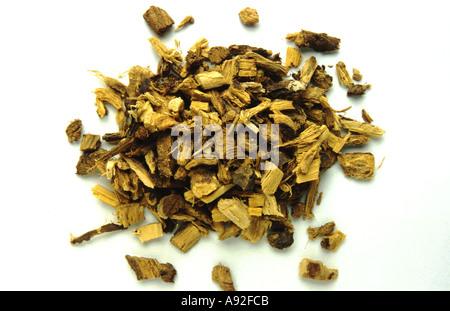 Medicinal plant Süßholz Lakritzwurzel Glycyrrhiza glabra Liquorice root Suessholz - Stock Photo