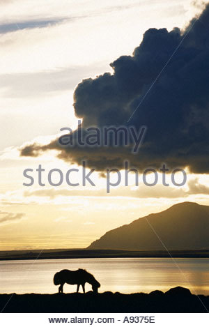 Silhouette of a horse biting grass by a lake or sea at sunset mountain in background - Stock Photo
