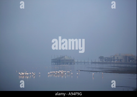 A large group of flamingos in the mist with The Raft restaurant in the background Walvis Bay lagoon Namibia - Stock Photo