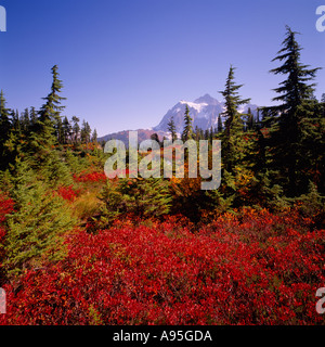 Mount Baker - Snoqualmie National Forest, Washington, USA  - Wild Blueberry Bushes in Alpine Meadow, Mt Shuksan - Stock Photo