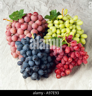 Thompson seedless table grapes california stock photo royalty free image 8785309 alamy - Seedless grape cultivars ...