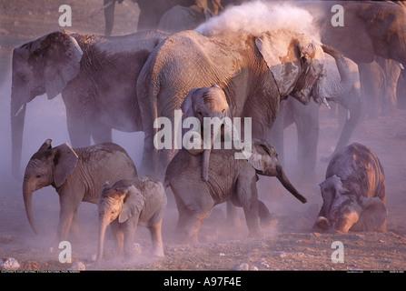 Group of elephants dust bathing Etosha National Park Namibia - Stock Photo