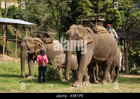 Elephant camp near Chiang Dao, Thailand - Stock Photo