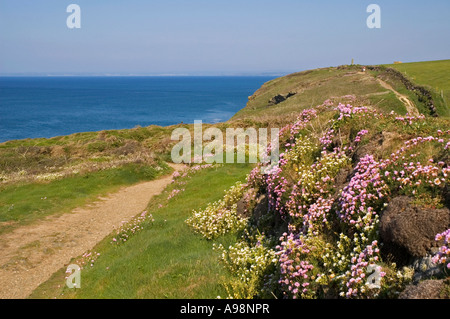 the south west coastal path near mullion  in cornwall,england - Stock Photo