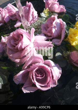 roses being soaked in water fountain - Stock Photo