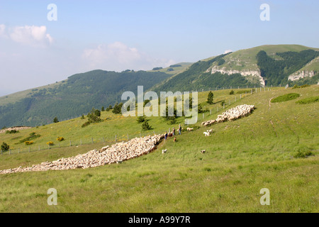 Shepherd counting his flock of sheep assisted by his working sheep dogs ,Sibillini National Park,Le Marche Italy - Stock Photo