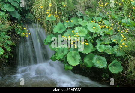 Waterfall in Cathedral Peak National Park, Drakensberg, South Africa - Stock Photo