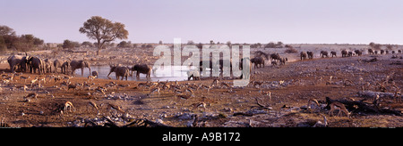 Elephants at the waterhole Etosha national park Namibia - Stock Photo