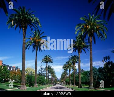 PALM TREES SOUTH WINDSOR AVENUE HOLLYWOOD LOS ANGELES CALIFORNIA USA - Stock Photo