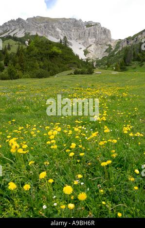 Mountain pasture around Malbun village with Ochsenkopf mountain in the background - Stock Photo