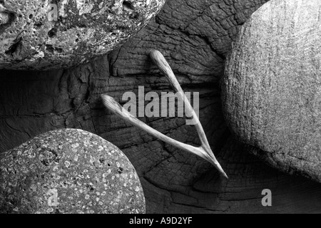 A black and white picture of a chicken wishbone on a piece of knotty wood with different types of pebbles. - Stock Photo