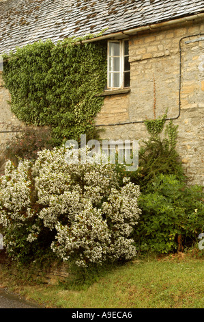 Country cottage Spelsbury Oxfordshire - Stock Photo