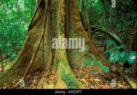 primary rainforest Langkawi Malaysia - Stock Photo
