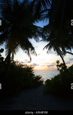 Sunset in the Maldives seen through foliage. - Stock Photo