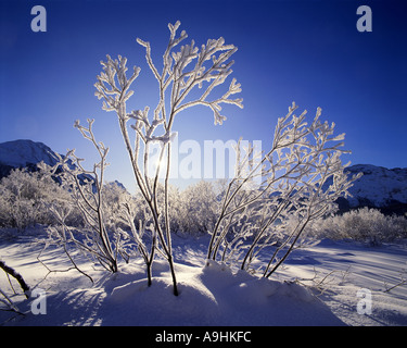 CH - UPPER ENGADIN: Winter Scene near Samedan - Stock Photo