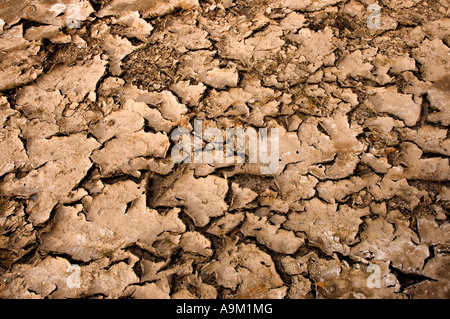cracked dry earth and dirt - Stock Photo